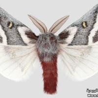 The Loveliest Butterflies