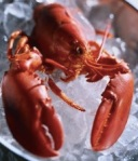 lobster cooked