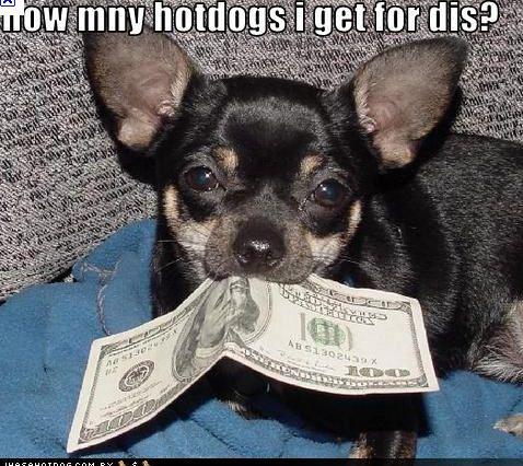 Image Result For Is Alpo Good Dog