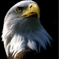 The Eagle And Its Rebirth- This Is Very Interesting And Inspirational