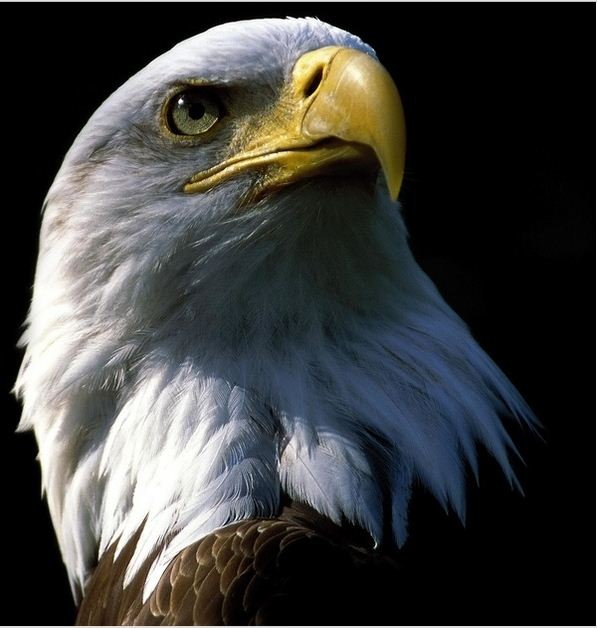 the eagle and its rebirth this is very interesting and