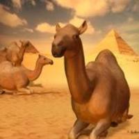 The Amazing Camel And Its Creator