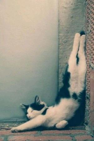 cats_d1