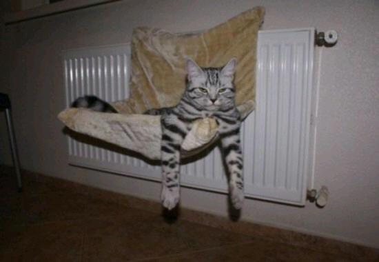 cats_d13