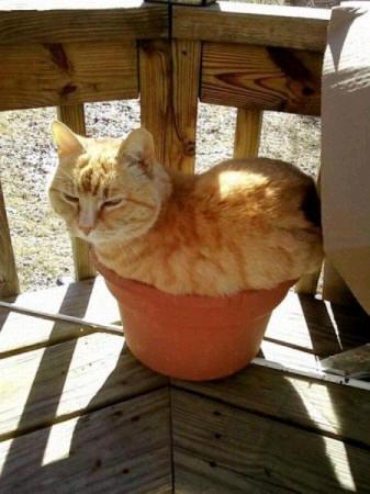 cats_d15
