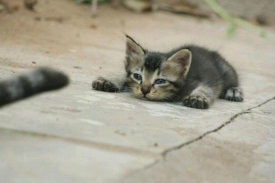 cats_d18