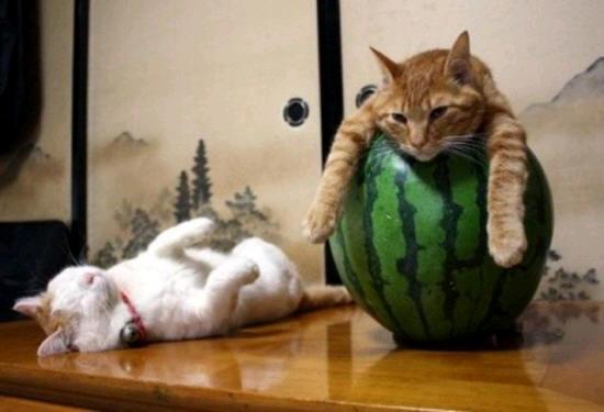cats_d20
