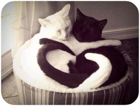 cats_d4