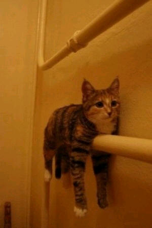 cats_d5