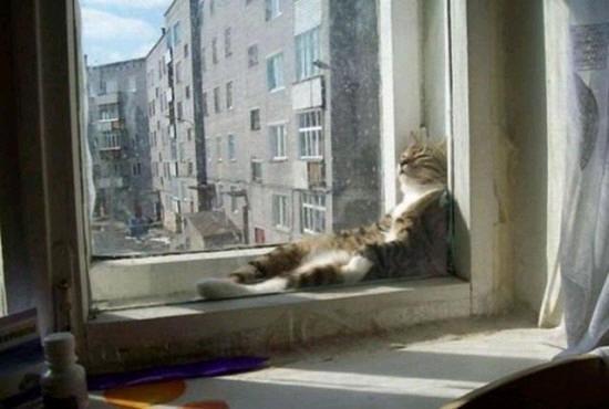 cats_d76
