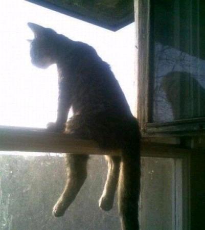 cats_d84