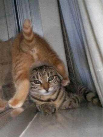 cats_d93