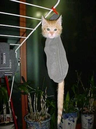 cats_d96