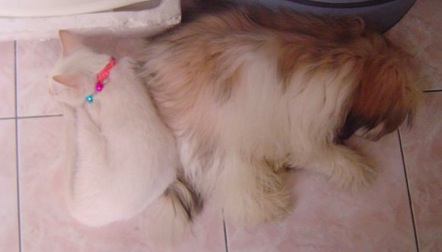 Shiro with a dog